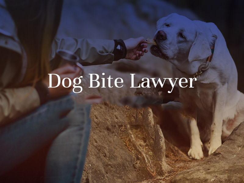 dog bite lawyer