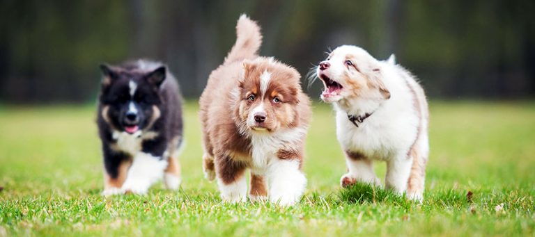 The Importance of Puppy Socialization: Doing It Right