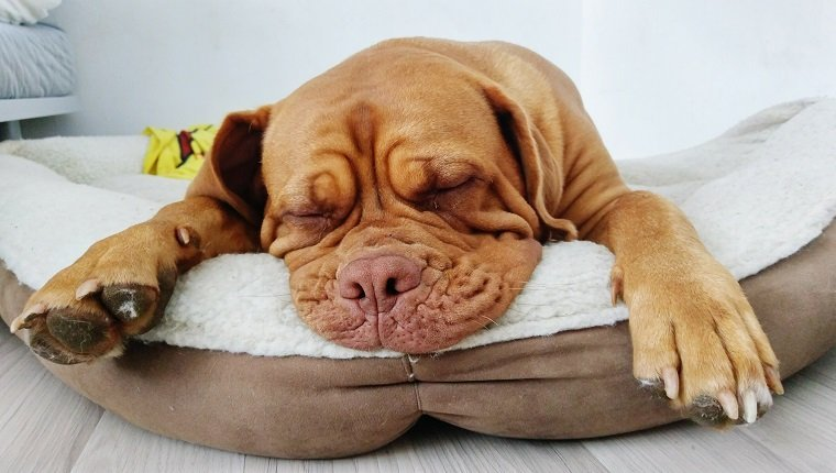Options, Options: Choices for Dog's Bed or Dog's Mat